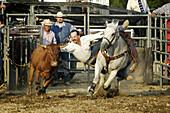 Action at a rodeo. 4-H Fair