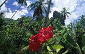 Tropical vegetation on the island of Nuku Hiva, French Polynesia