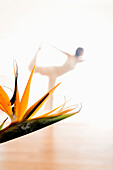 Mid adult woman practising yoga, Bird of Paradise Flower in foreground (Flight Pose), yoga studio at Linz, Austria