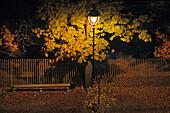 Street lamp in the park, Jardin des Tuileries in Autumn, 1e Arrondissement, Paris, France