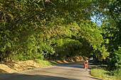 Jamaica St. Elisabeth Bamboo Avenue 2 1/2 miles long Bamboo trees overgrowing the road  like a tunnel