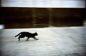 Animal, Animals, Black cat, Black cats, Blurred, Cat, Cats, Chance, Color, Colour, Contemporary, Daytime, Domestic cat, Domestic cats, Exterior, Feline, Felines, Felis catus, Horizontal, Motion, Movement, Moving, One, One animal, Outdoor, Outdoors, Outsid