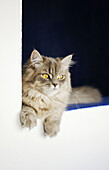 Animal, Animals, Cat, Cats, Color, Colour, Contemporary, Corner, Corners, Domestic cat, Domestic cats, Feline, Felines, Felis catus, Gray, Grey, Indoor, Indoors, Innocence, Innocent, Inside, Interior, Kitten, Kittens, Lean, Leaning, Mammal, Mammals, One,