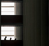 Building, Buildings, Business, Color, Colour, Descending, Down, Horizontal, Human, Indoor, Indoors, Inside, Interior, Light, Office, Offices, People, Person, Persons, Shadow, Shadows, Silhouette, Silhouettes, Staircase, Stairs, Three, Three persons, Windo