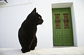 Andalucia, Andalusia, Animal, Animals, Architecture, Black, Cat, Cats, Closed, Color, Colour, Contrast, Contrasts, Costa del Sol, Daytime, Detail, Details, Domestic cat, Domestic cats, Door, Doors, Europe, Exterior, Felis catus, Green, Malaga province, Mi