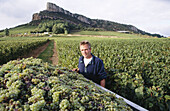 Worker of the vineyards in Burgundy. France