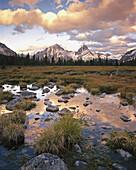 Wetland meadows of the Tonquin Valley. Jasper National Park. Alberta. Canada