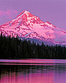Afterglow on Mount Hood above Lost Lake. Mount Hood National Forest. Oregon. USA
