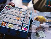 Fortune teller bird. Ocotlan market. Ocotlan, Oaxaca. Mexico.