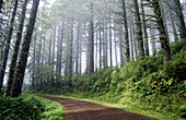 Trail in fog. Cascade Head. Oregon coast. USA.