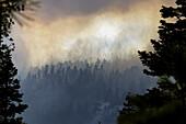 Aktivität, Aussen, Baum, Bäume, Brand, Brände, Brennen, Draussen, Energie, Farbe, Feuer, Flamme, Flammen, Hitze, Katastrophe, Katastrophen, Kraft, Land, Landschaft, Landschaften, Natur, Ökologie, Rauch, Tageszeit, Umwelt, Verlust, Verluste, Wald, Wälder,