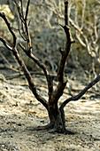Aktivität, Aussen, Baum, Bäume, Brand, Brände, Draussen, Energie, Farbe, Feuer, Gebrannt, Hitze, Katastrophe, Katastrophen, Kraft, Land, Landschaft, Landschaften, Natur, Ökologie, Tageszeit, Umwelt, Verlust, Verluste, Wald, Wälder, Wut, Zerstörung, M55-54