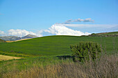 Crops in Ardales. Malaga province. Andalusia. Spain