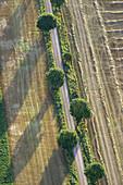 Avenue on agricultural field. Eslöv. Skåne. Sweden