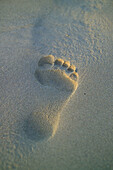 Beach, Beaches, Close up, Close-up, Closeup, Color, Colour, Concept, Concepts, Daytime, Ephemeral, Exterior, Footprint, Footprints, Outdoor, Outdoors, Outside, Sand, Shape, Shapes, Surface, Surfaces, Trace, Traces, N09-475552, agefotostock