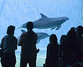 Dolphins. Aquarium. Genova, Liguria, Italy