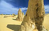 Detail of heavily eroded yellow limestone pinnacle, at The Pinnacles, Nambung National Park, Western Australia