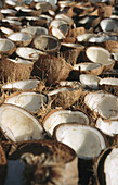Husked coconut halves (Cocos nucifera) drying in the sun to make copra, Sulawesi, Indonesia.
