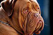 Animal, Animals, Close up, Close-up, Closeup, Color, Colour, Contemporary, Daytime, Dog, Dogs, Exterior, Face, Faces, Facial expression, Facial expressions, Headshot, Headshots, Horizontal, Innocence, Innocent, Look, Looking, Mammal, Mammals, Mood, Nose,