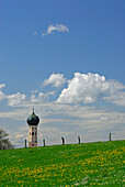 View over dandelion meadow to baroque spire, Upper Bavaria, Bavaria, Germany