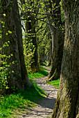 Path between deciduous trees