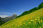 Flower meadow, mountains in background, Lofer, Berchtesgaden Alps, Salzburg (state), Austria