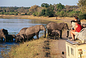 Tourists watching african elephants passing the river Chobe, Botswana, Africa