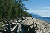 Driftwood at Holy Nose peninsula, Lake Baikal, Russia