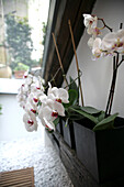 Orchids in vases, Living Room, Decoration, Home, Lifestyle
