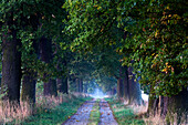 Deserted oak alley at Reinhardswald, Domain Beberbeck, Hesse, Germany, Europe