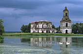 Abandoned church and geese on the pond, Hirino, Nizhny Novgorod region, Russia