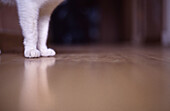 Animal, Animals, At home, Cat, Cats, Close up, Close-up, Closeup, Color, Colour, Corridor, Corridors, Detail, Details, Domestic cat, Domestic cats, Feline, Felines, Felis catus, Floor, Floors, Home, Indoor, Indoors, Interior, Leg, Legs, Mammal, Mammals, M