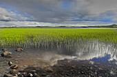 Wetland. Ovre Pasvik Natural Park, Norway.