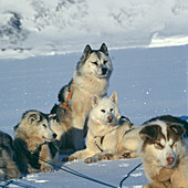 Animal, Animals, Bound, Bounds, Break, Break-time, Breaks, Cold, Coldness, Color, Colour, Contemporary, Covered, Daytime, Dog, Dog breed, Dog breeds, Dogs, Domestic animal, Domestic animals, Ecosystem, Ecosystems, Exterior, Ice, Mammal, Mammals, Many, Nat