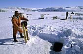 Professionnal fisherman fishing for halibut through ice hole using 800 m long line, Disko bay, Greenland