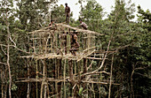 Koroways men building a house in trees, Western Papuasia, Former Irian-Jaya, Indonesia