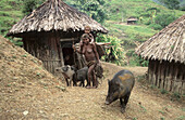 Yalis woman coming back from field-work with her pigs and carrying her child, Uldam village, Western Papuasia, Former Irian-Jaya, Indonesia