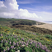 Wildflowers. Point Reyes National Seashore. California. USA.