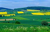 Europe, Germany, Lower Saxony , landscape near Edesheim, canola fields