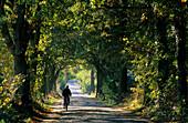 Europe, Germany, Mecklenburg-Western Pommerania, isle of Rügen, tree alley near Zirkow