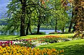 Tulpen im Schlosspark, Insel Mainau, Bodensee, Baden-Württemberg, Deutschland