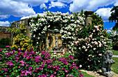 Europe, England, Kent, Hever, Hever Castle, garden