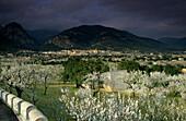 Europe, Spain, Majorca, near Selva, blooming almond trees