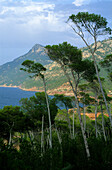 Europe, Spain, Majorca, near Port d'es Cannoge, coast