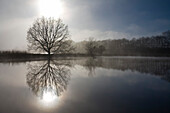 View over lake to bare deciduous tree in morning mist, Kiel, Schleswig-Holstein, Germany