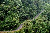 Track in the rainforest of Manu National Park, Amazonia, Peru, South America