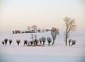 Winter scene Slomniki of Poland