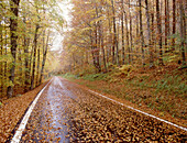 Autumn, Autumnal, Color, Colour, Daytime, Empty road, Empty roads, Europe, Exterior, Fall, Forest, Forests, Horizontal, Nature, Navarra, Navarre, Nobody, Outdoor, Outdoors, Outside, Perspective, Road, Roads, Scenic, Scenics, Season, Seasons, Spain, Straig