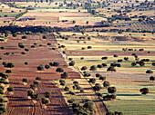 Holm Oaks (Quercus ilex) in Guadiana river valley. Puebla de Don Rodrigo. Ciudad Real province, Spain