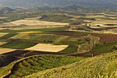 Agricultural fields. Nájera, La Rioja, Spain